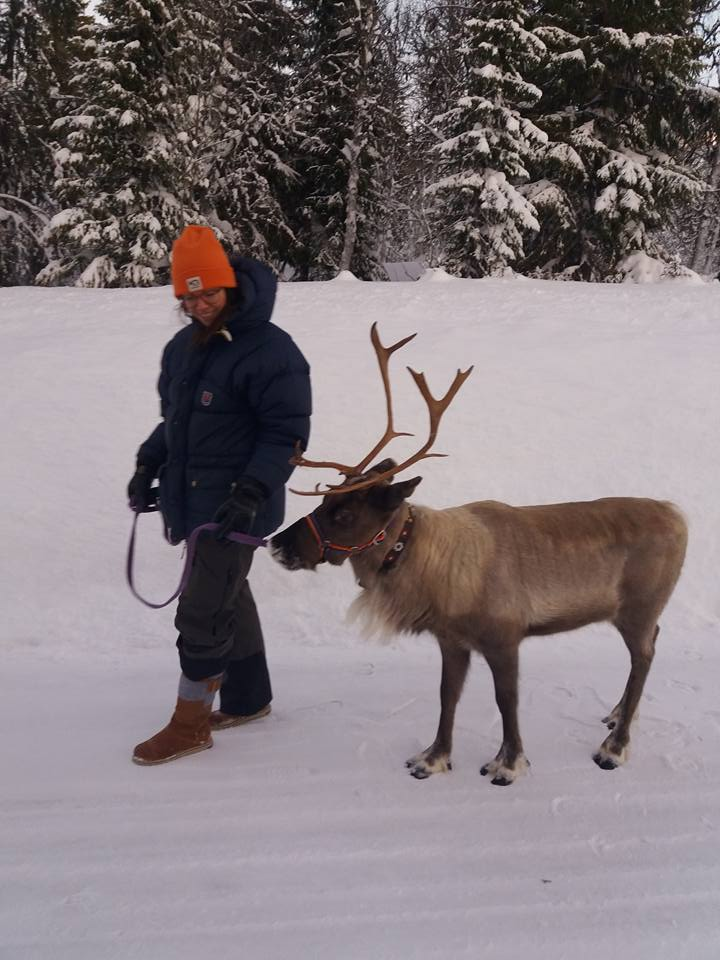 Take a walk with a reindeer